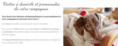 Visuel du site Cyclo pet's - conciergerie animale bordelaise - pet sitting - présentation des prestations