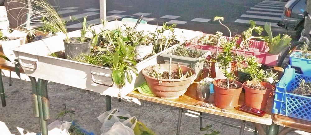 Marché éco-responsable troc plantes